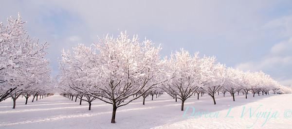 Corylus Filbert Orchard_004