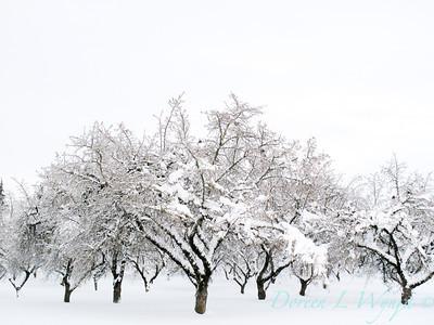 Filbert Orchard_041J