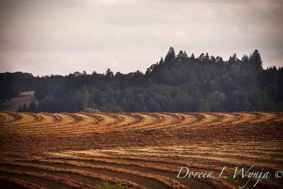 Clover field_015