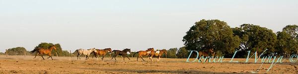 Horses_007