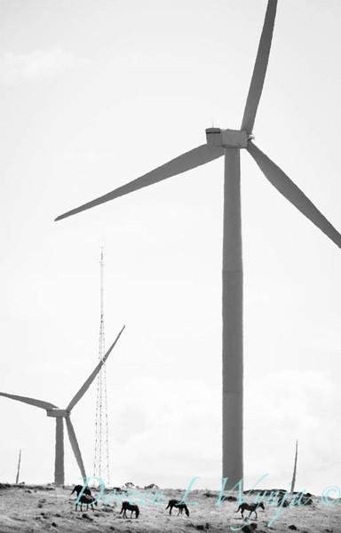 Wind Power_5852