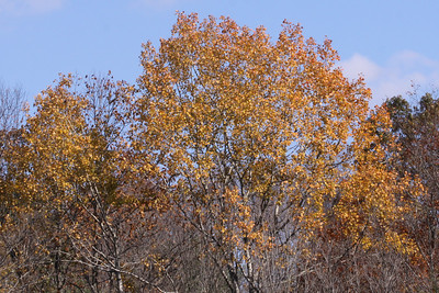 10 10 20 Mercur Fall Scenery-036