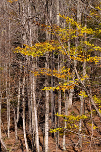 10 10 20 Mercur Fall Scenery-068