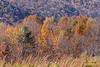 10 10 20 Mercur Fall Scenery-257