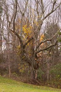 10 10 29 Fall Scenery-068