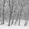 14 11 26 Snow on Mercur Hil-003