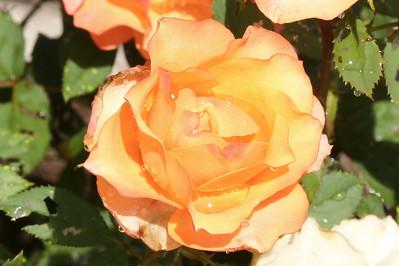 16 08 12 Flowers-5