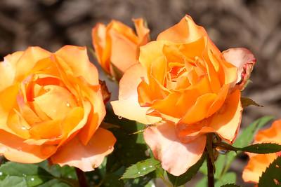16 08 12 Flowers-24