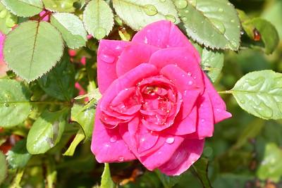 16 08 12 Flowers-19