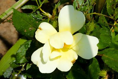 16 08 12 Flowers-3