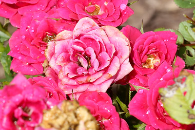 16 08 12 Flowers-21
