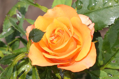 16 08 12 Flowers-8