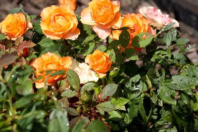 16 08 12 Flowers-26