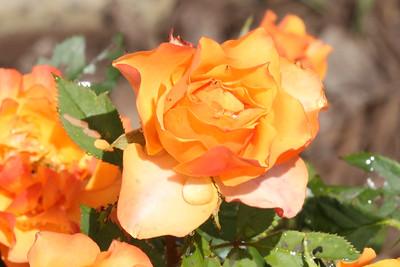 16 08 12 Flowers-6