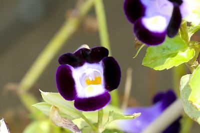 16 08 12 Flowers-48