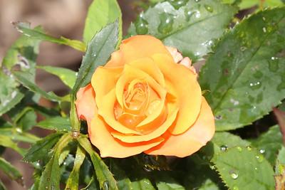 16 08 12 Flowers-12