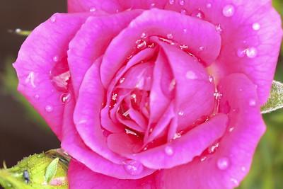 16 08 12 Flowers-16