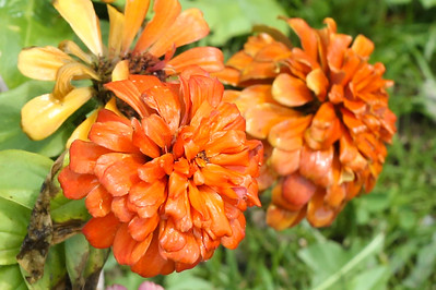 16 08 12 Flowers-45