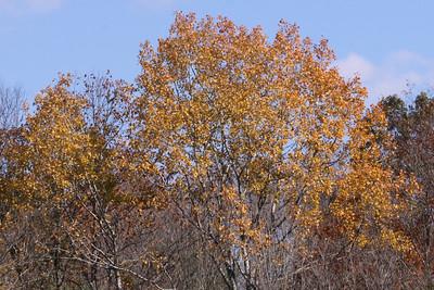 10 10 20 Mercur Fall Scenery-036