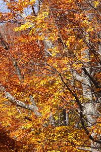 10 10 20 Mercur Fall Scenery-117