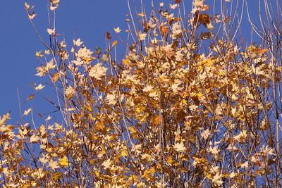 10 10 20 Mercur Fall Scenery-118
