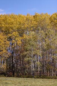 10 10 20 Mercur Fall Scenery-087