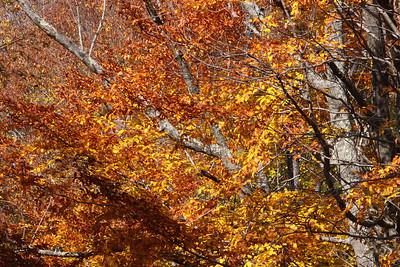 10 10 20 Mercur Fall Scenery-116