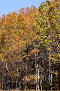 10 10 20 Mercur Fall Scenery-092
