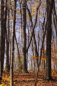 10 10 20 Mercur Fall Scenery-131