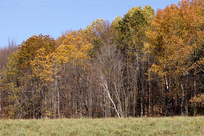 10 10 20 Mercur Fall Scenery-090