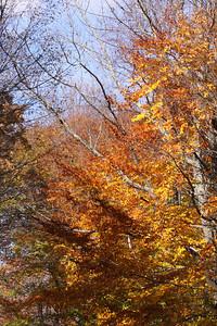 10 10 20 Mercur Fall Scenery-115