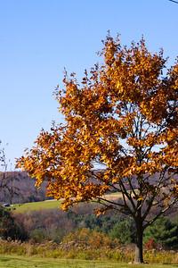 12 10 22 Fall Scenery Bradford Co-113