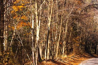 12 10 22 Fall Scenery Bradford Co-071