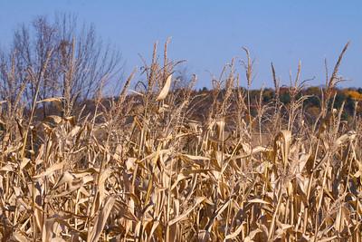 12 10 22 Fall Scenery Bradford Co-013