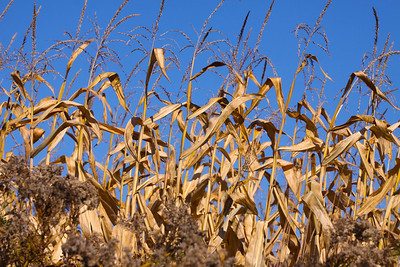 12 10 22 Fall Scenery Bradford Co-044