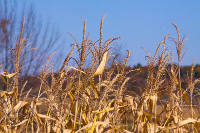 12 10 22 Fall Scenery Bradford Co-014