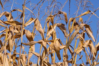 12 10 22 Fall Scenery Bradford Co-047