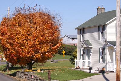 12 10 22 Fall Scenery Bradford Co-008