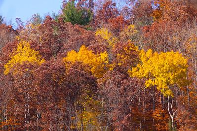 12 10 22 Fall Scenery Bradford Co-082