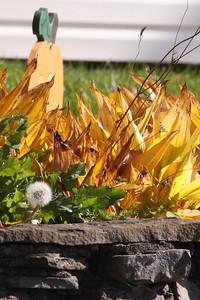 12 10 22 Fall Scenery Bradford Co-002