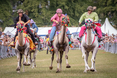 Camel racing at the Todmorden Country Fair, 2018