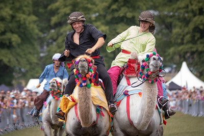 Camel racing at the Todmorden Country Fair