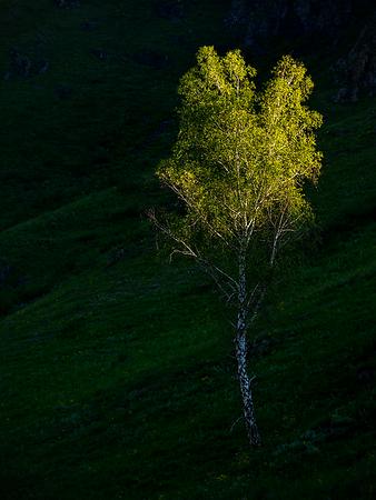 Somewhere in Altai, Russia