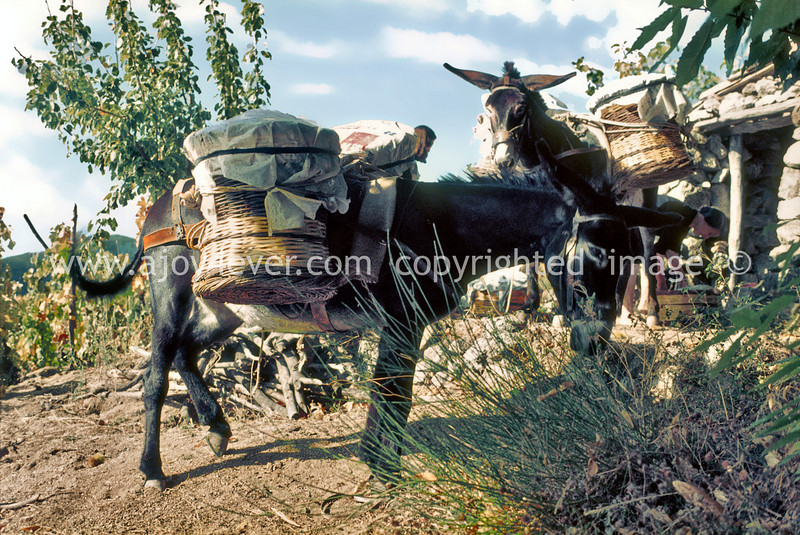 guardavalle, village, countryside, pic_141bbook2L.psd .jpg