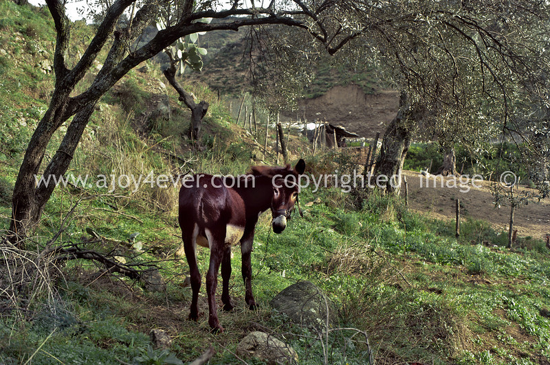 guardavalle, village, countryside, pic_026book2L.psd. jpg