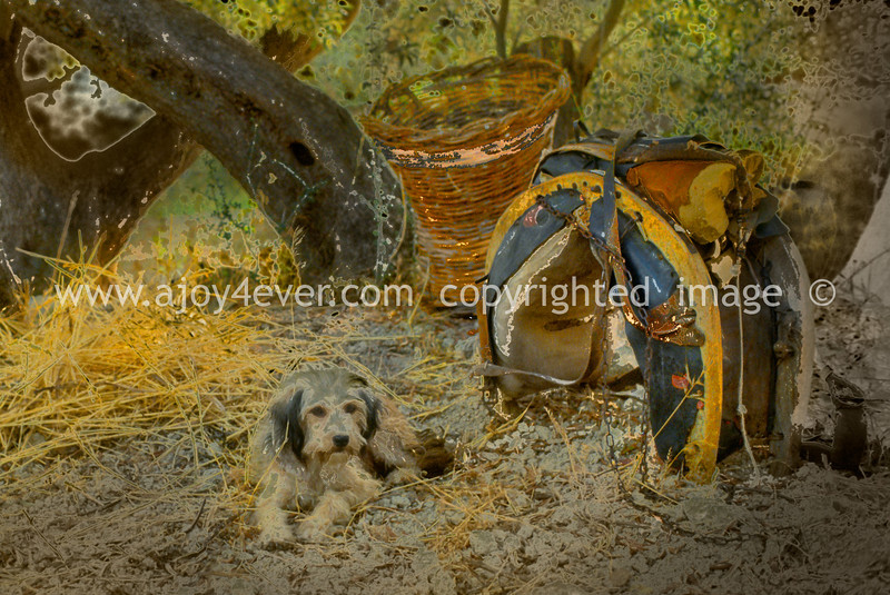 guardavalle, village, countryside, pic_158d2ccbook3L. psd.jpg