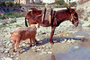 guardavalle, village, countryside, pic_047bbook1L.psd .jpg
