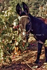 guardavalle, village, countryside, pic_174book2L.psd. jpg