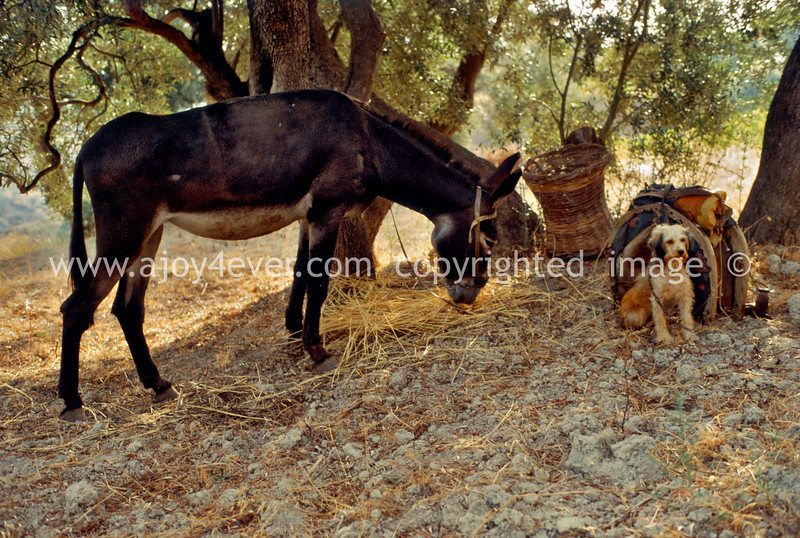 guardavalle, village, countryside, pic_191cbook3L.psd .jpg