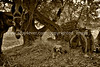 guardavalle, village, countryside, pic_158d1cbook3L.p sd.jpg